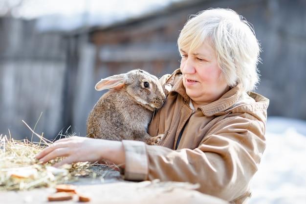Coelhinha marrom cautelosa fofa com uma mulher idosa. gado doméstico