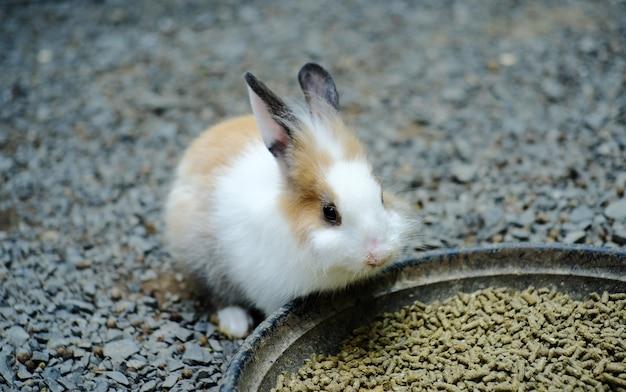 Coelhinho branco comendo comida