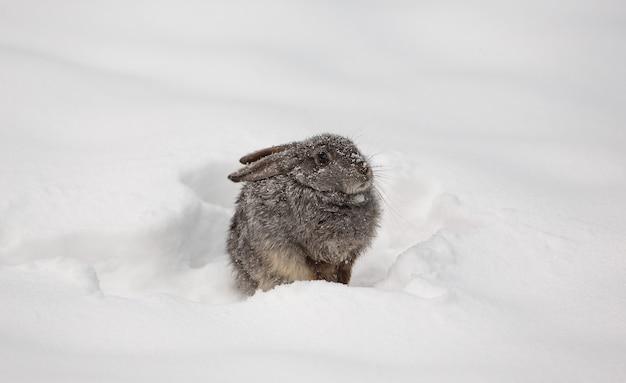 Coelhinho branco fofo na neve