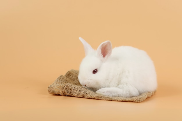 Coelhinho da páscoa branco fofo de saco