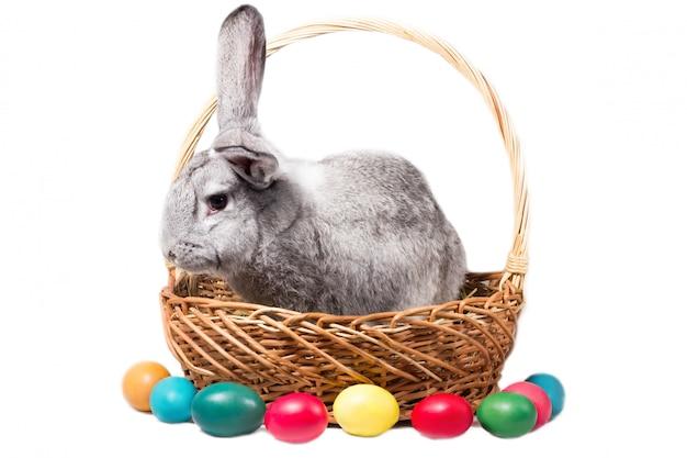 Coelhinho da páscoa cinzento em uma cesta com ovos, isolado, em branco para o feriado da páscoa