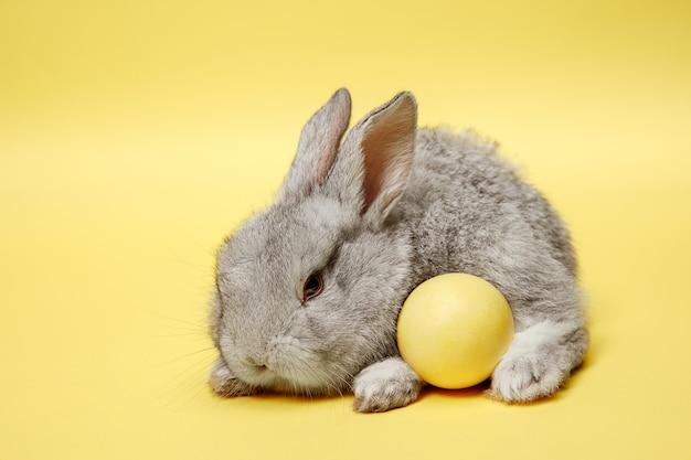 Coelhinho da páscoa com ovo pintado em fundo amarelo. conceito de férias da páscoa.