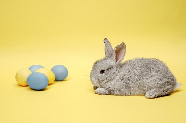 Coelhinho da páscoa com ovos pintados em fundo amarelo. conceito de férias da páscoa.