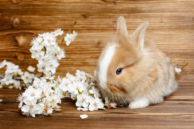 Coelhinho da páscoa em uma mesa de madeira com um raminho de flores da primavera