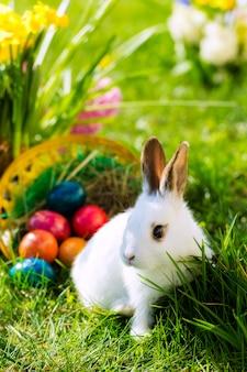 Coelhinho da páscoa no prado com cesta e ovos