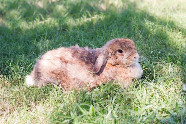 Coelhinho fofo na grama verde no dia de sol