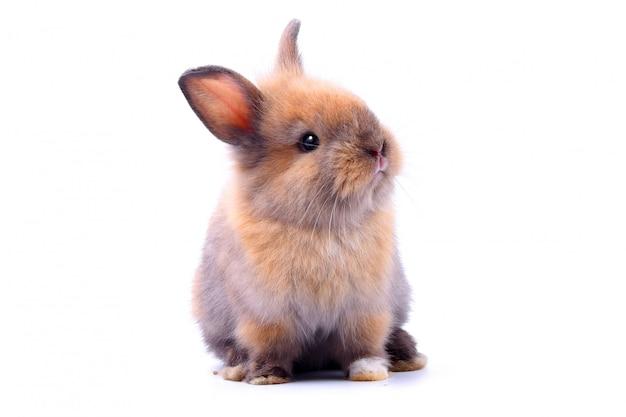 Coelhinho, orelhas bonitos, sentado em um branco