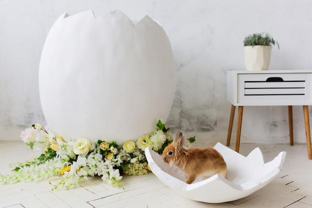 Coelhinho senta-se em um ovo decorativo em um estúdio