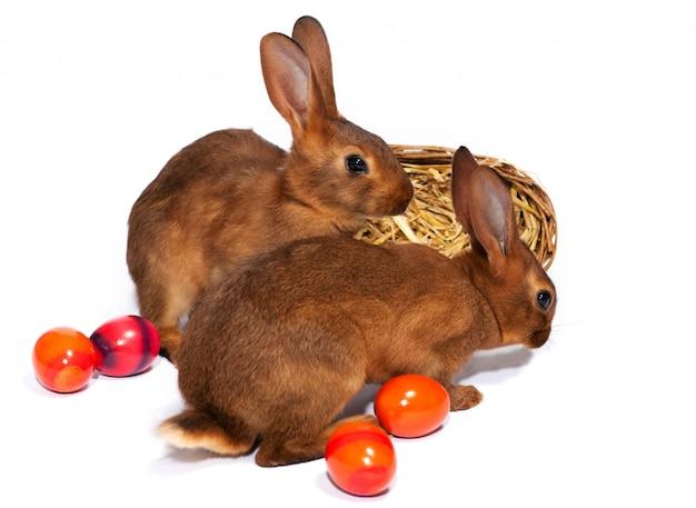 Coelhinhos da páscoa com ovos de páscoa