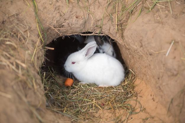 Coelhinhos estão sentados comendo cenouras em um buraco, alguns estão dormindo