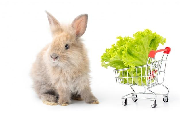 Coelho adorável do bebê que come a alface orgânica no carrinho de compras no fundo branco