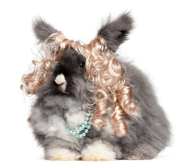 Coelho angorá inglês usando peruca e pérolas na frente de fundo branco