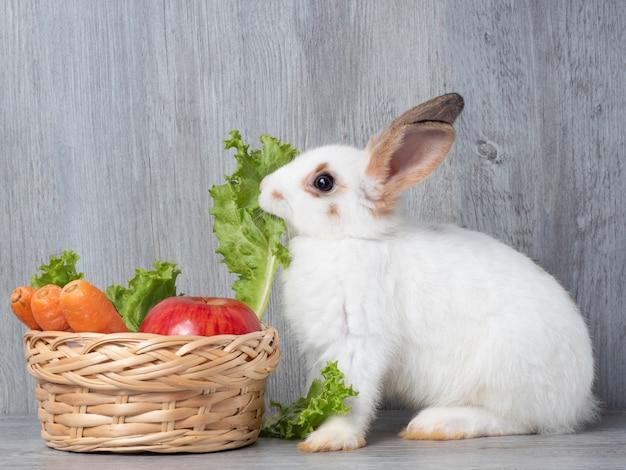 Coelho bonito branco que come a cenoura e a maçã da alface na cesta de madeira.