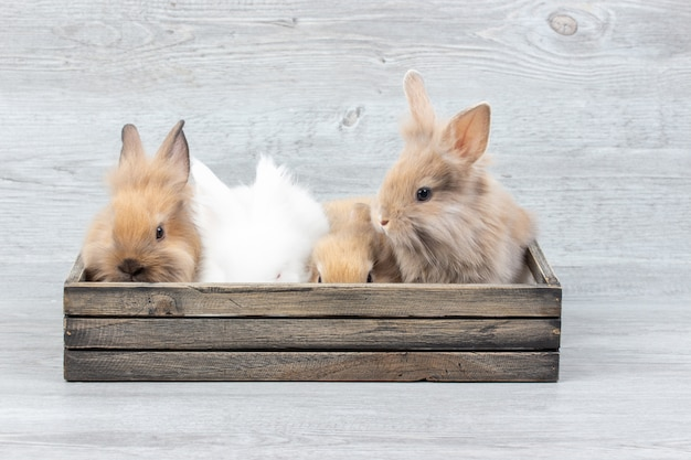 Coelho bonito do bebê na caixa de madeira na tabela de madeira. coelhos brancos e marrons, deitado em uma caixa.
