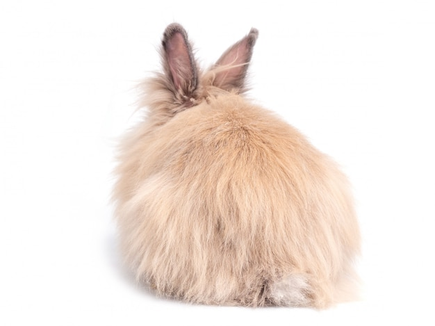 Coelho bonito do urso de peluche de brown que encontra-se, vista traseira isolada na parede branca. parte inferior e cauda de coelho.