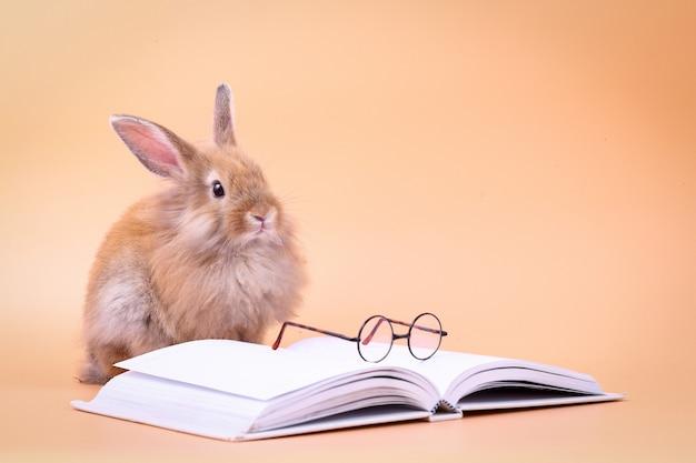 Coelho bonito, sentado em um livro branco com óculos colocados. feriado da páscoa