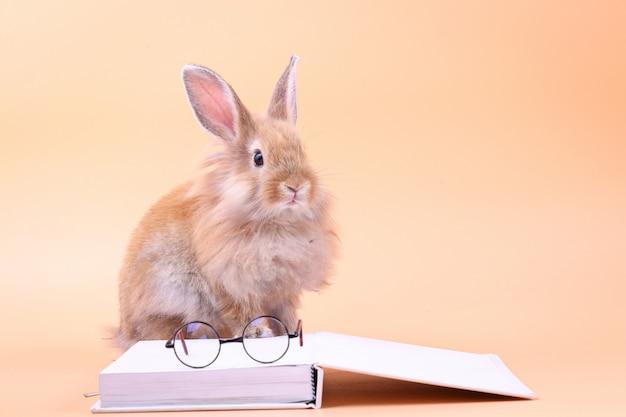 Coelho bonito, sentado em um livro branco com óculos colocados