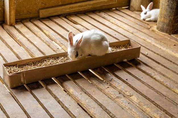 Coelho bonito sentado na panela de comida.
