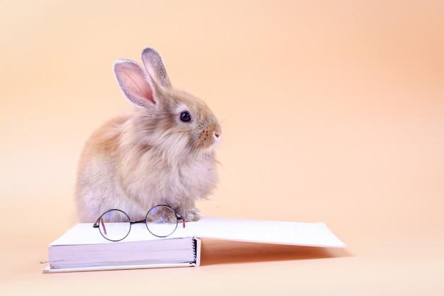 Coelho bonito sentado no livro branco com óculos colocados