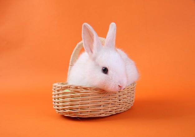 Coelho branco bebê na cesta de madeira em fundo laranja
