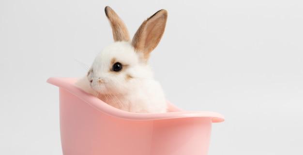 Coelho branco pequeno que senta-se na banheira cor-de-rosa com fundo branco isolado no estúdio.