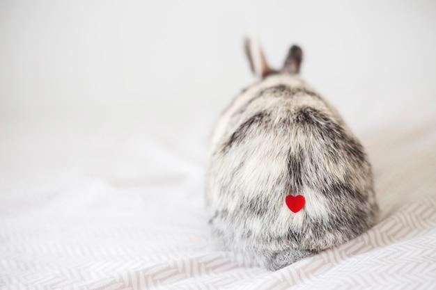 Coelho com coração de ornamento na pele