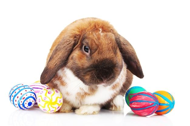 Coelho com orelhas caídas e ovos isolados no branco