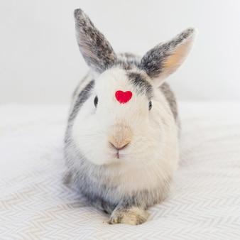 Coelho, com, ornamento, coração vermelho, frente