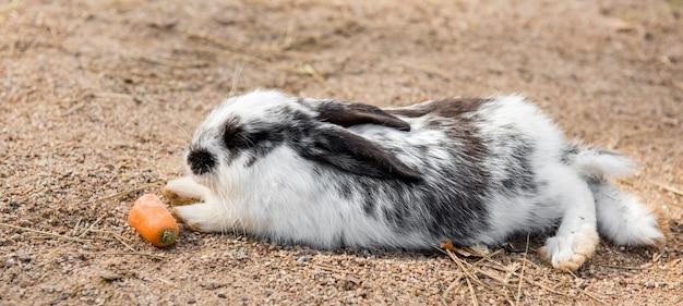 Coelho da páscoa branco grande e fofo comendo cenoura lá fora