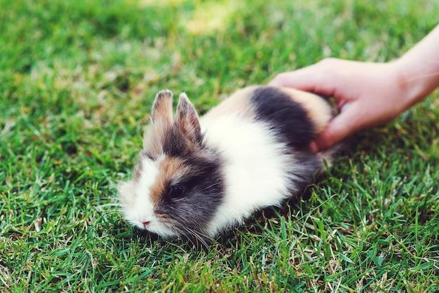 Coelho decorativo em casa ao ar livre. coelhinho fofo. coelho fofo decorativo anão bonito. coelho em fundo de grama verde. símbolo da páscoa. animal de estimação fofo em uma caminhada. coelhinho da páscoa.