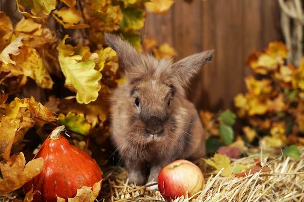 Coelho decorativo no local do outono, sentado em um palheiro de palha com as orelhas levantadas.