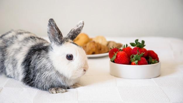 Coelho deitado na mesa perto de morangos frescos
