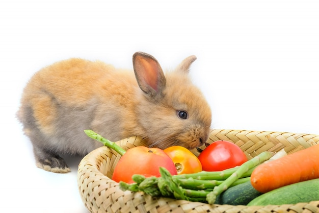 Coelho e legumes e fundo branco