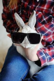 Coelho em óculos de sol