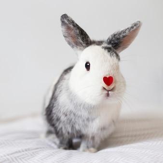 Coelho engraçado com coração de ornamento vermelho no nariz