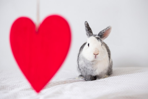 Coelho engraçado e ornamento coração vermelho