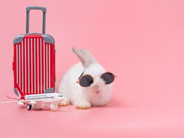 Coelho engraçado usando óculos escuros e a bagagem vermelha, avião vai de férias.