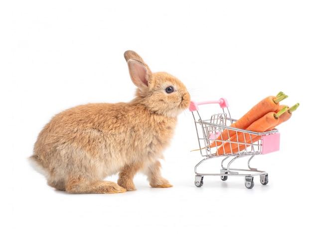 Coelho fofinho vermelho-marrom e o carrinho de compras com cenouras