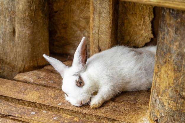 Coelho fofo dormindo no chão de madeira.