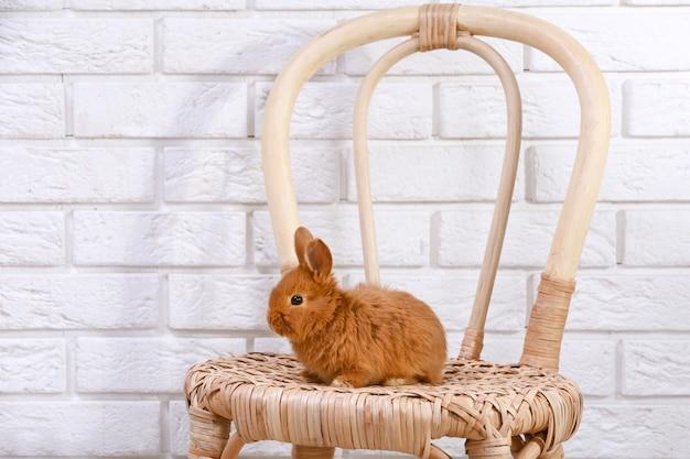 Coelho fofo e engraçado em uma cadeira de vime contra uma parede de tijolos claros