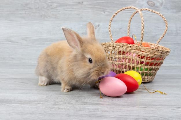 Coelho marrom bonito do bebê e cesta de ovos da páscoa coloridos no fundo de madeira.