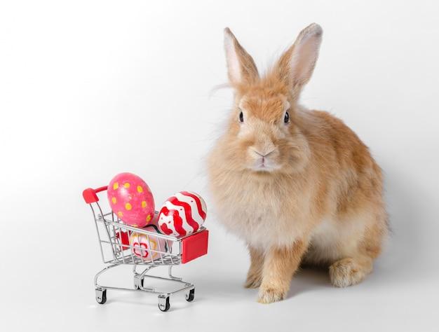 Coelho marrom com ovos de páscoa no carrinho de compras em fundo branco