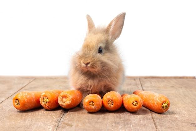 Coelho marrom comendo cenoura no fundo da mesa de madeira