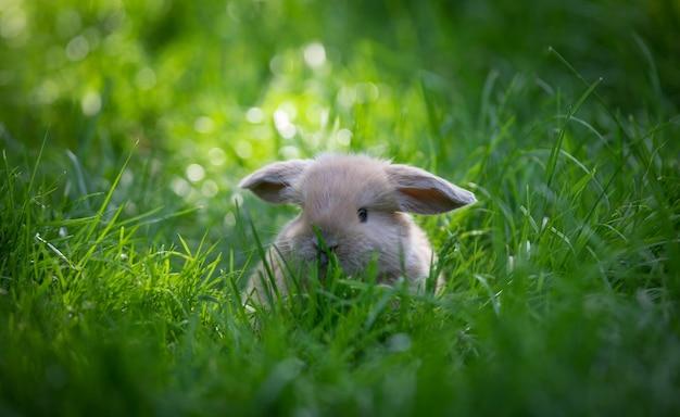 Coelho marrom engraçado em uma colina verde