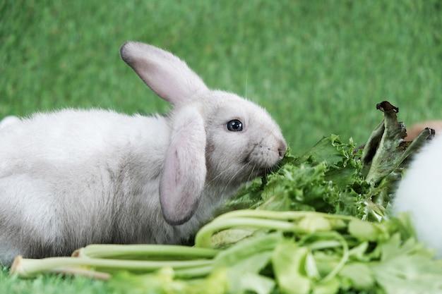Coelho na grama verde, comendo frutas e vegetais