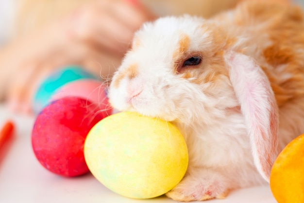 Coelho pequeno do coelho com ovos e os marcadores coloridos na tabela. prepearing para a páscoa