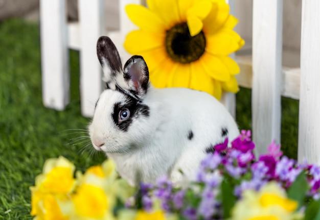 Coelho preto e branco na grama perto da cerca