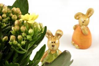 Coelhos de páscoa a olhar para uma flor