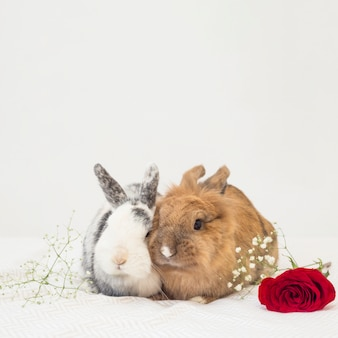 Coelhos engraçados perto de flores na folha de cama