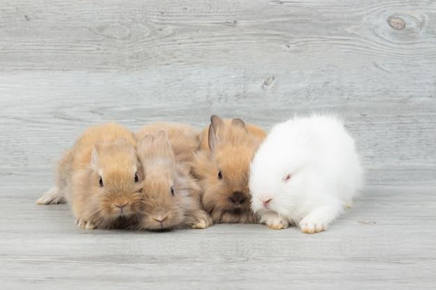 Coelhos fofinho adorável bebê. coelhos brancos e marrons